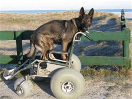 Hond op strandrolstoel. Foto Lucas Lauxen