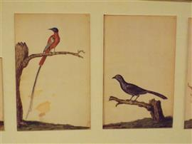 Waterverfvogels van Beeckman. Foto Koos Dijksterhuis