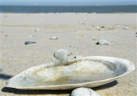 Strandgaper van na Columbus. Foto Koos Dijksterhuis