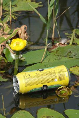 Gele plomp Foto Koos Dijksterhuis
