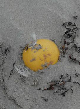 Grapefruit op strand. Foto Koos Dijksterhuis